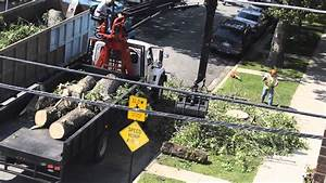 tree removal chicago
